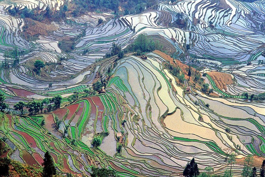 Terrace_field_yunnan_china